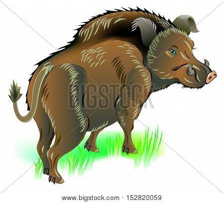 Illustration of wild boar, vector cartoon image.