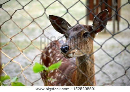 Deer in the zoo. Selective focus. Photo through the bars. Walk on the weekends. The protection of these animals.