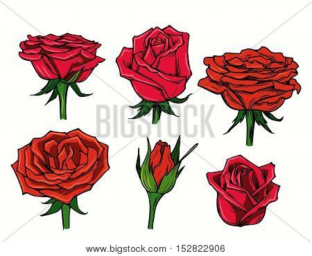 vector red beautiful roses flower on white