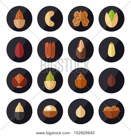 Nuts and seeds vector circle icons set. Modern flat design.