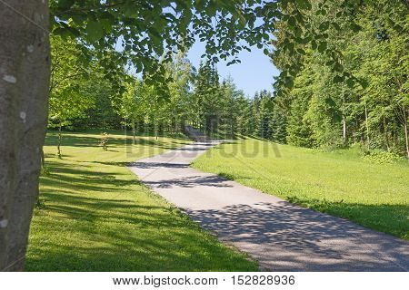 Walkway in the park, Summer in the park