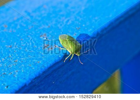 A closeup of a green stink bug on a metal post