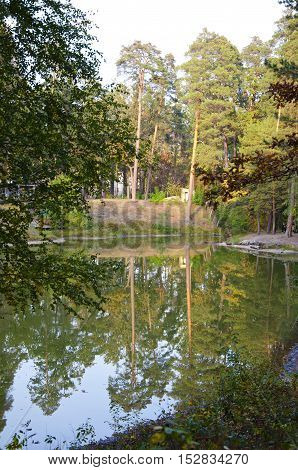 Green Deep Leaf Forest Near Water