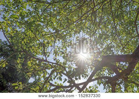 Sun rays shining through trees, nature background