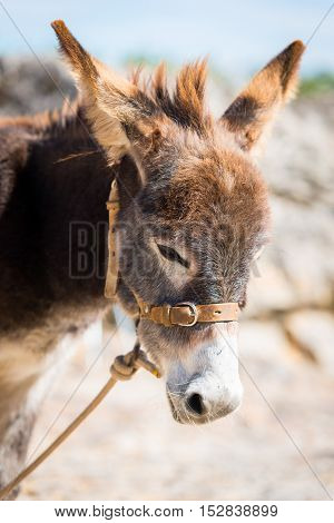 A cute donkey in the street in Marvao Portugal