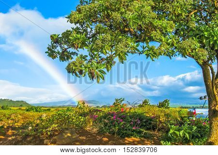 Scenic landscape with tropical vegetation, blossoming spring and rainbow in the background. Maui, Hawaii, Unites States. Concept holiday background.