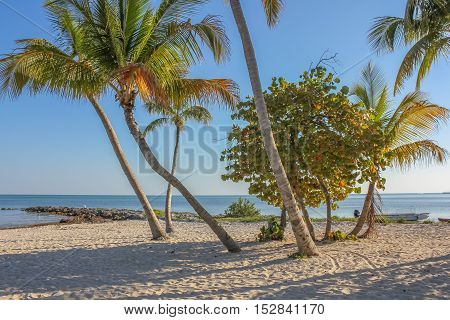 Coconut palms at Rest Beach in Key West, Florida, United States. Rest Beach is located next to Higgs Beach.