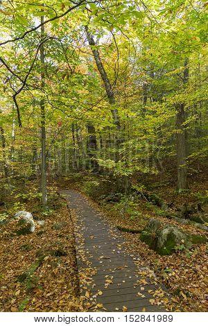 Boardwalk In A Fall Forest - Ontario, Canada