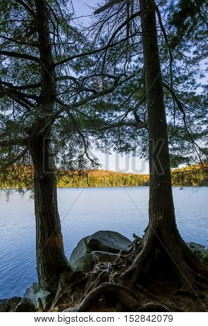 Eastern Hemlocks Silhouetted On An Autumn Lake - Ontario, Canada
