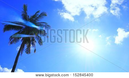 Silhouette Sunshine had Shining in the blue sky have cloud and coconut tree at Sukhothai province in Thailand Asia.