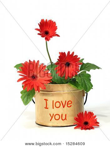 "Pretty potted daisy with ""I love you"" on the container"