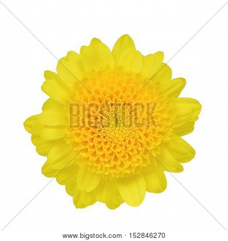Yellow flower isolated on the white background
