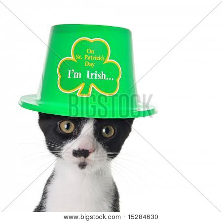 Cute black and white kitten wearing a St Patricks day hat.