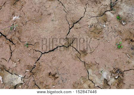 Texture of brown dry desert land with cracks and plant seeds. Natural background.