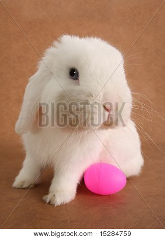 Bunny rabbit with an Easter egg.