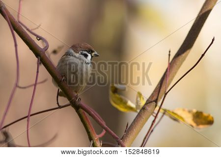 Portrait of a sparrow on a branch