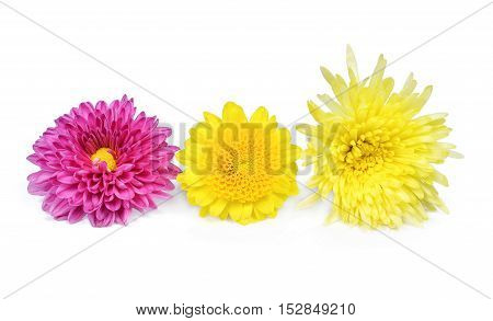 Pink yellow and Purple Flower Isolated on White