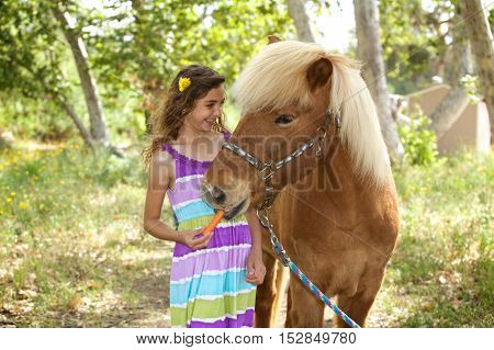 A cute little girl and her Icelandic Pony Friend.  She s giving him a carrot