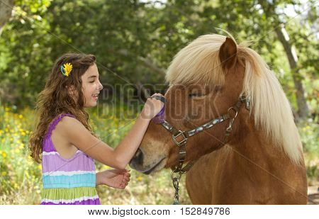 A cute little girl and her Icelandic Pony Friend.  She is brushing his muzzle and his eyes are closed.