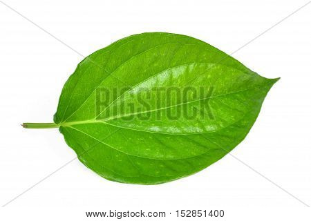 Green betel leaf heart shape isolated on white