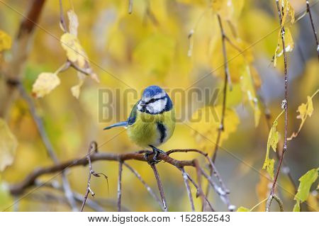the bird sits in autumn in the Park among the yellow leaves