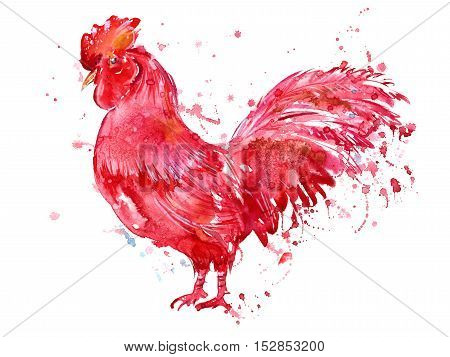 Postcard with red rooster and blotch.Sketch.Symbol of the new year 2017.Watercolor hand drawn illustration.White background.