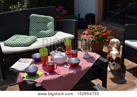 Set of garden furniture with served breakfast and with pets and flowers around