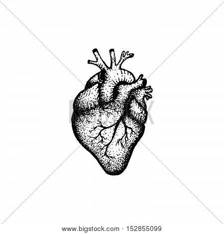 Vector Hand Drawn Heart Illustration.