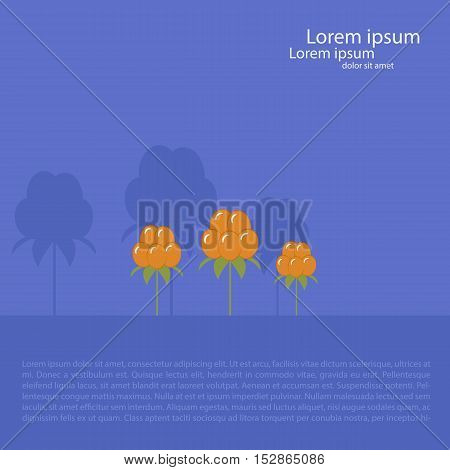 Card template with three cloudberries. purple background