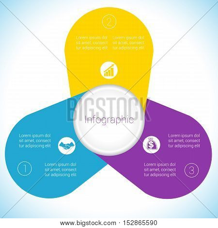 Flower Camomile infographic template colourful petals three positions.