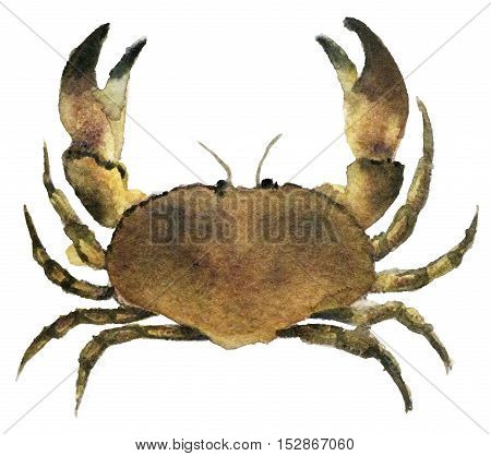watercolor sketch of crab on white background