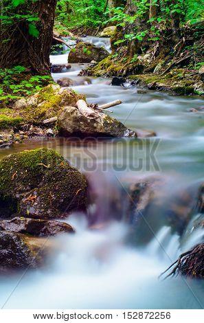 Forest Stream In Zadiel Valley