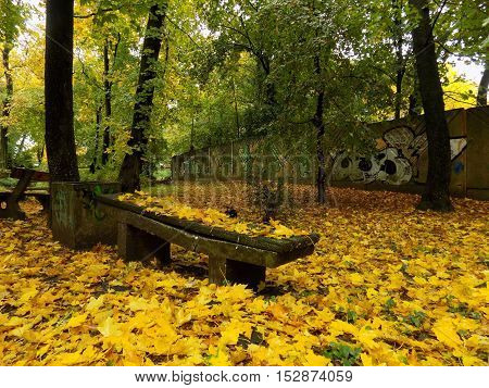 Fallen yellow leaves on bench in park during autumn