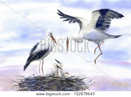 Storks in the nest.Watercolor hand drawn illustration.