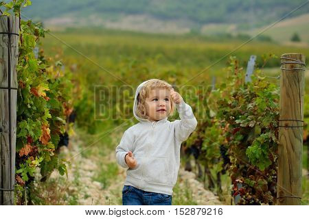 Cute baby boy child with curly blond curly hair in gray hoody and jeans show cool on vineyards background