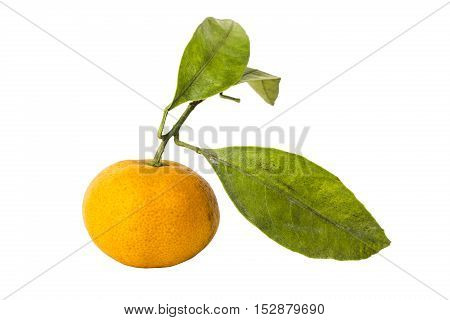 Tangerine with leaves isolated on white background.