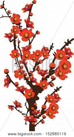 Red spring flowers sunshine blooming on tree vector illustration