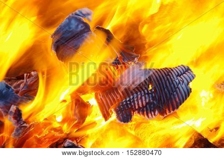 The bright yellow flames of a campfire consume some cardboard.