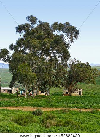 Farm Houses, Western Province South Africa 12aa