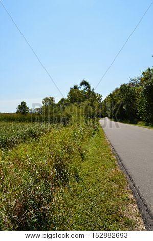 A green prairie landscape during the summer