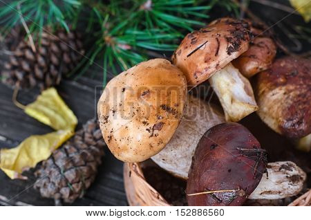 Edible mushrooms collected in the forest. Porcini mushrooms and boletus.