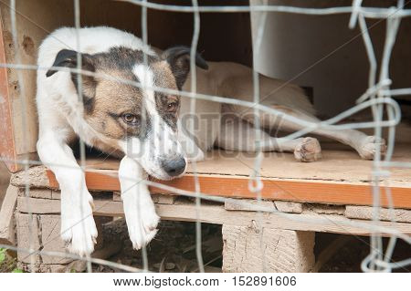 Stray Dog Refuge