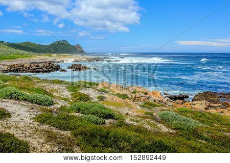 Cape of Good Hope Nature Reserve in Cape Peninsula National Park, South Africa. Cape Point on background.