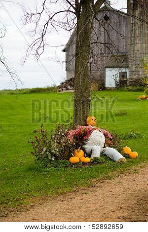 Barn with a pumpkin head scarecrow sitting against a tree.