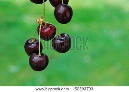Fruit Background Texture Pattern