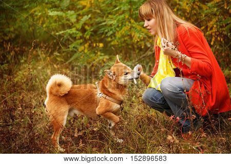 Girl playing with a dog Shiba Inu in autumn park. Pet. Pedigree dog. Funny animals and their owners. Riot of colors of nature. Outdoor Activities.