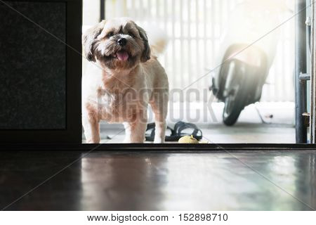 The dog is waiting to play at the door