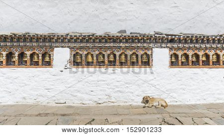 Religious prayer wheels and dog in Bhutan