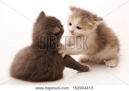 Little 1 month old kittens are fighting and playing