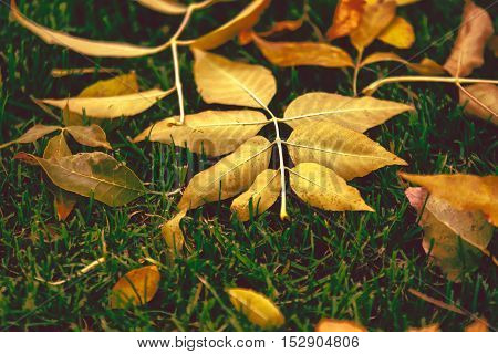 Autumn season is here. Leafs in the park.